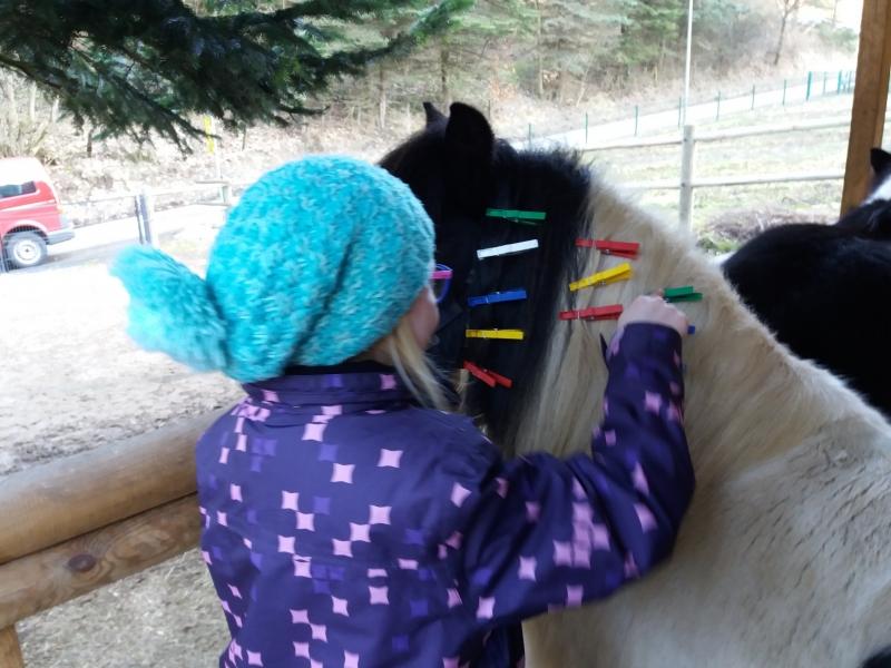 Pferde starkes Lernen 2017 003
