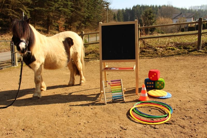 Pferde starkes Lernen 2017 037