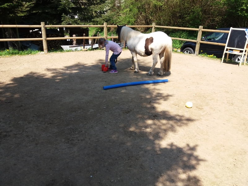 Pferde starkes Lernen 2017 121