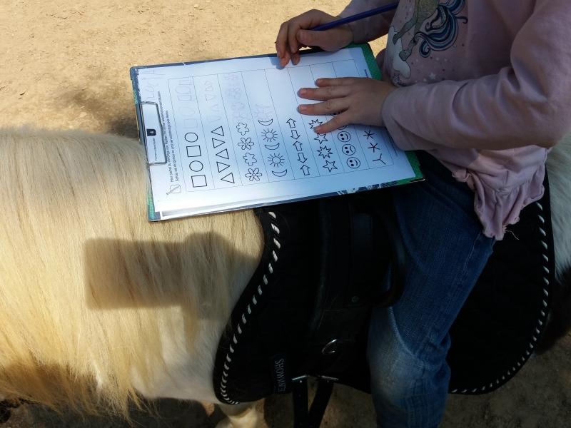 Pferde starkes Lernen 2017 124