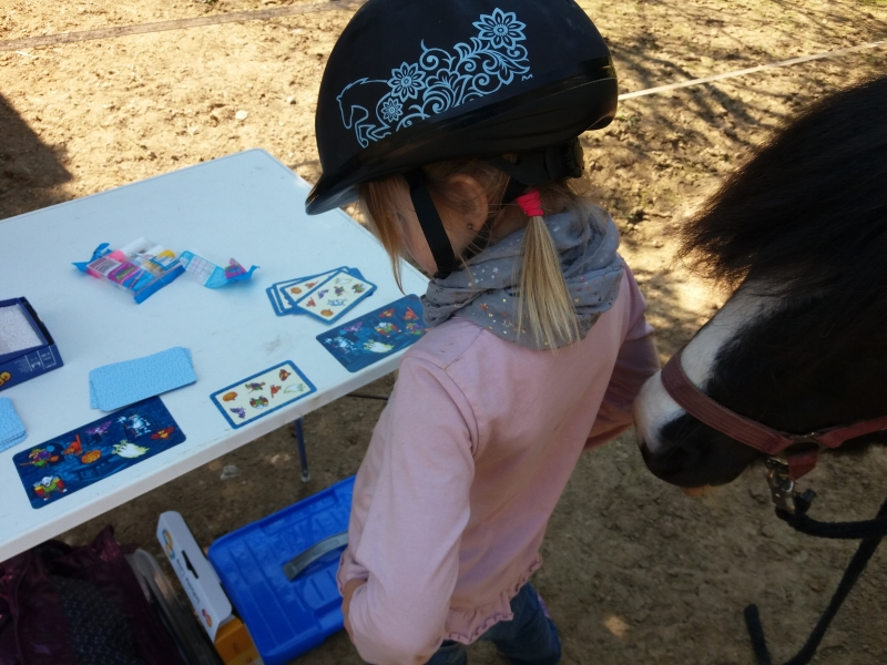 Pferde starkes Lernen 2017 127