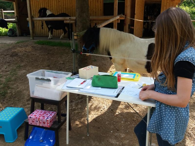Pferde starkes Lernen 2017 151