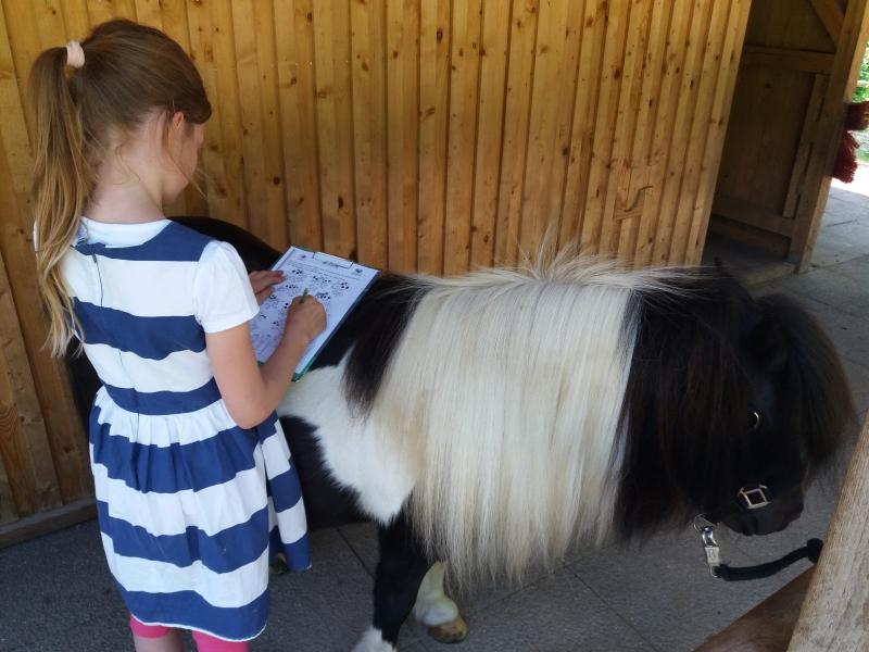Pferde starkes Lernen 2017 157