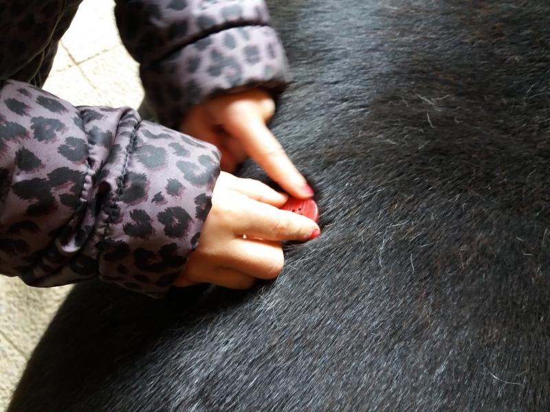 Pferde starkes Lernen 2017 163