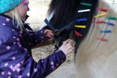 Pferde starkes Lernen 2017 004