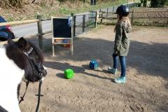 Pferde starkes Lernen 2017 082