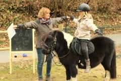 Pferde starkes Lernen mit Amy 13.11.2016 von Gerd (82.2)